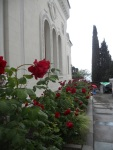 Roses at Livadia Palace in Yalta